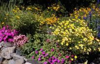 Floral Display (Steve Soreff)