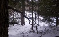 Snow (S. Soreff)