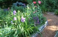 image Nottingham flower garden