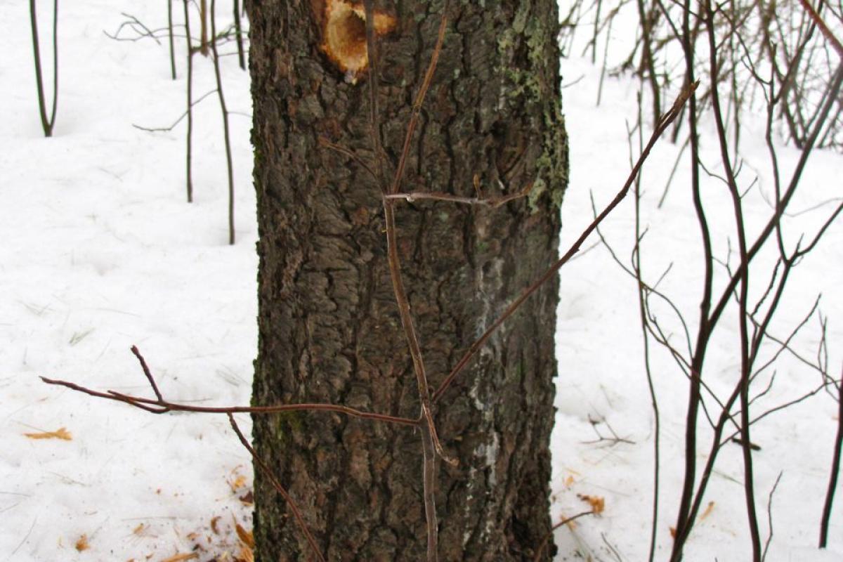photo of woodpecker hole in tree