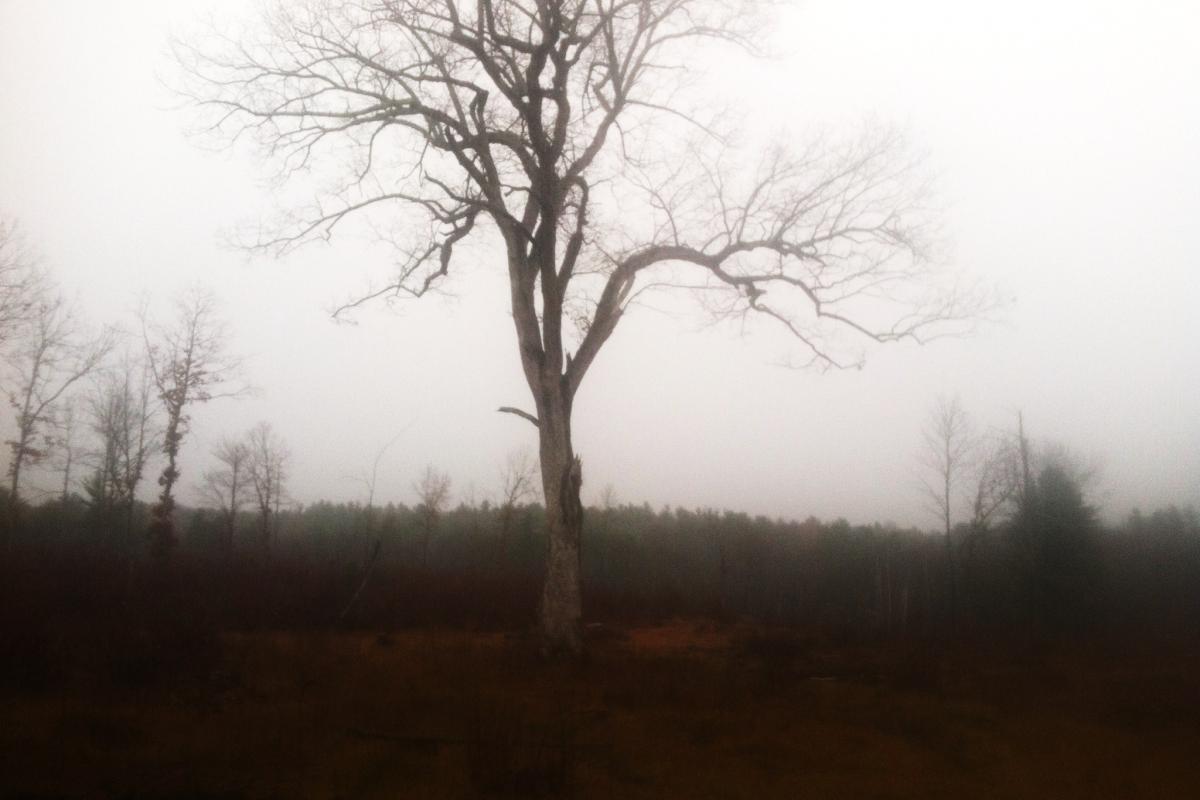 photo of Terninko property