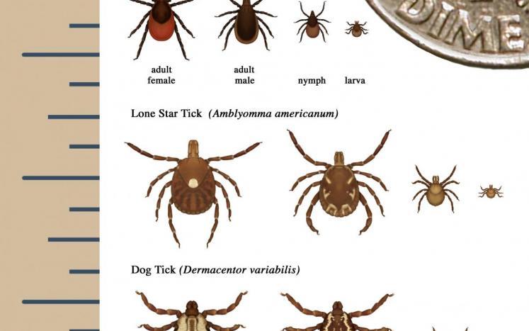 image ticks